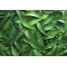 Масло эвкалипта. Масло (инфуз) листьев эвкалипта на масле виноградных косточек.
