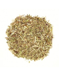 Душица (трава)